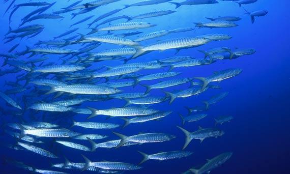 Spoločná rybárska politika EÚ