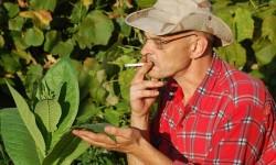 EÚ dotuje pestovanie tabaku, aj keď bojuje proti fajčeniu