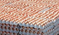 Spoločná poľnohospodárska politika EÚ – Farmári zúrivo rozbíjajú vajcia