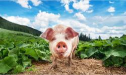 Spoločná poľnohospodárska politika – zjednodušením k väčšiemu chaosu