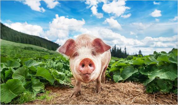 Spoločná poľnohospodárska politika a dotácie