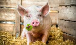 Spoločná poľnohospodárska politika EÚ | Farmári žiadajú väčšiu pomoc