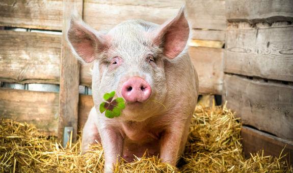 Spoločná poľnohospodárska politika EÚ a farmári